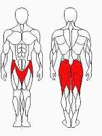 Vadzaari 1212 Тренажер для ягодичных мышц