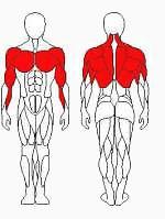 Vadzaari 1217 Блок для мышц спины